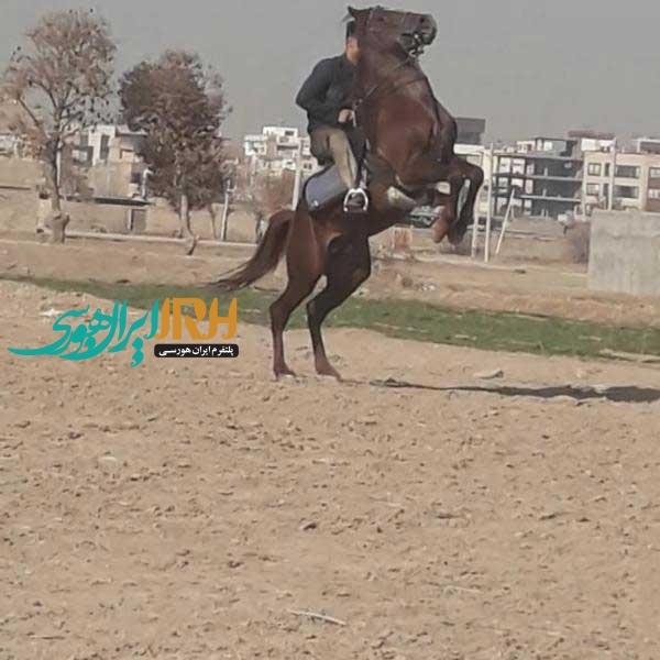 نریان 4 ساله دره شور