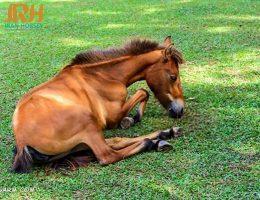 لاغری اسب ها