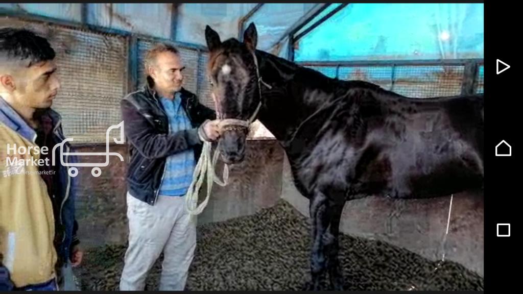 فروش اسب