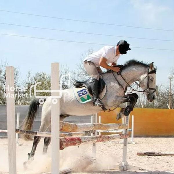 اسب پرشی ترکمن یموت