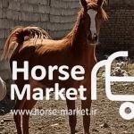 اسب مادیان عرب مصری
