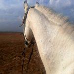 اسب دوخونه